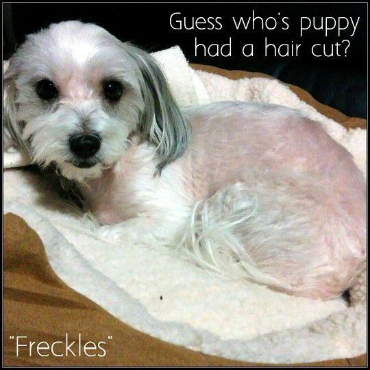 Guess who's puppy had a hair cut?