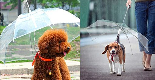 Or perhaps the umbrella leash, so as not to cramp your dog's style. | 26 Adorable Products Every Dog Owner Needs