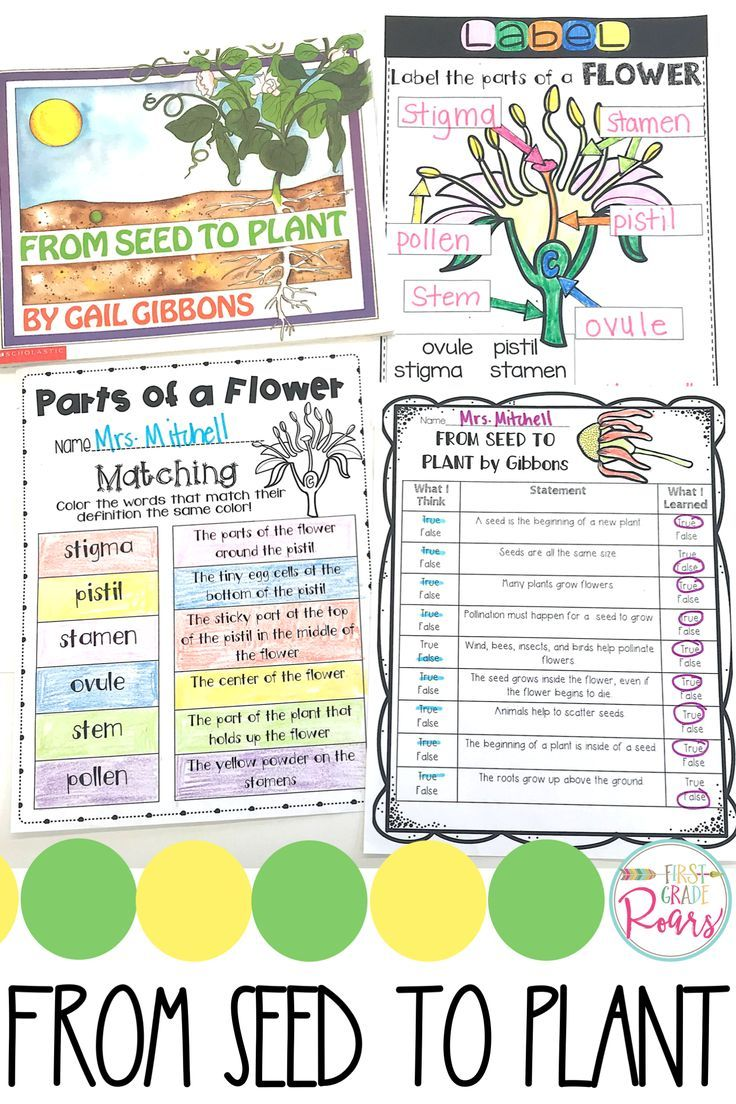 This Plant Unit Will Have Your Students Engaged And Excited About Living Things This Is A Great Unit For Kind Plants Kindergarten Plant Activities Plants Unit [ 1104 x 736 Pixel ]