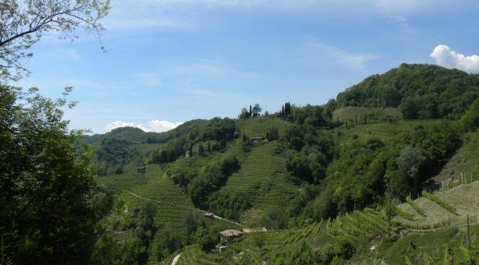La strada del vino Prosecco