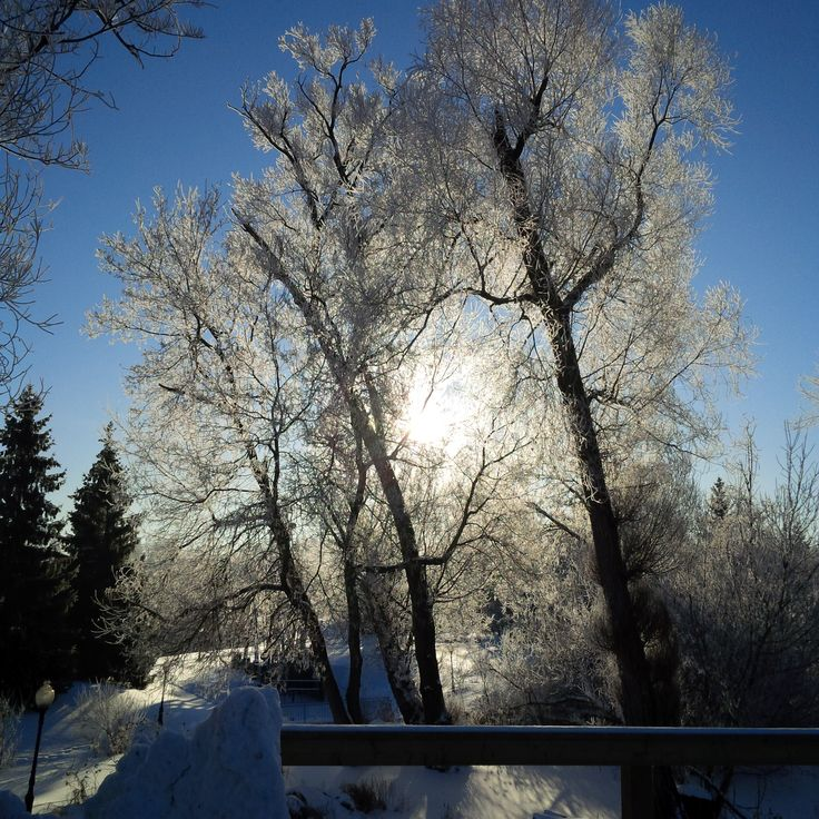 The frost on the trees and the morning sun made this a spectacular view from our office.