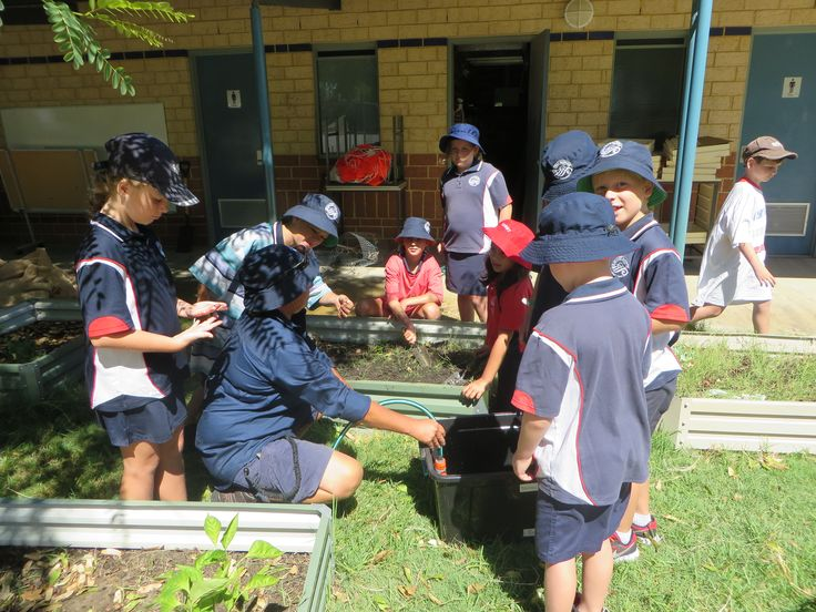 Learning about gardening at Secret Harbour Primary School.