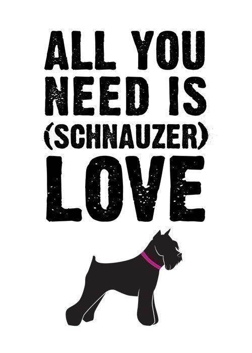 all you need is schnauzer love . 5x7 art print por letterhappy