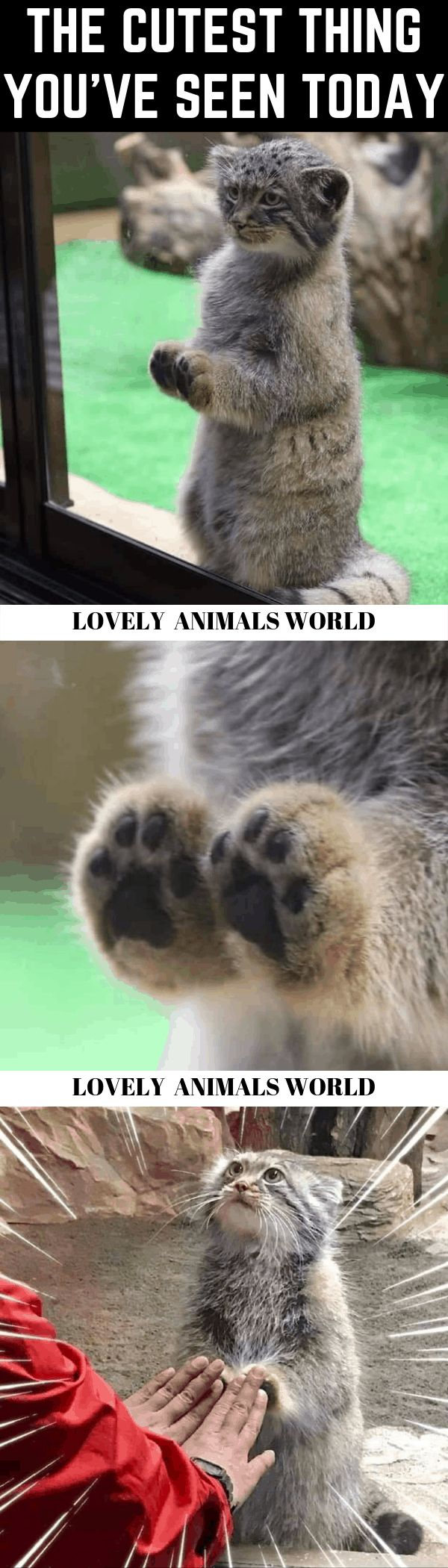 Cat Memes Of The Day 32 Pics – Ep60 #animalmemes #catmemes #memes – Lovely Animals World