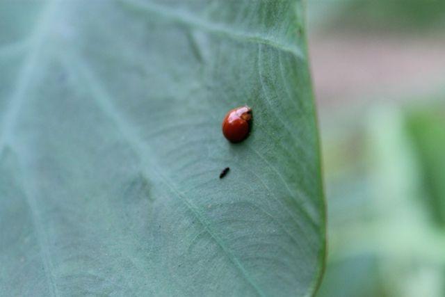kumbang {}