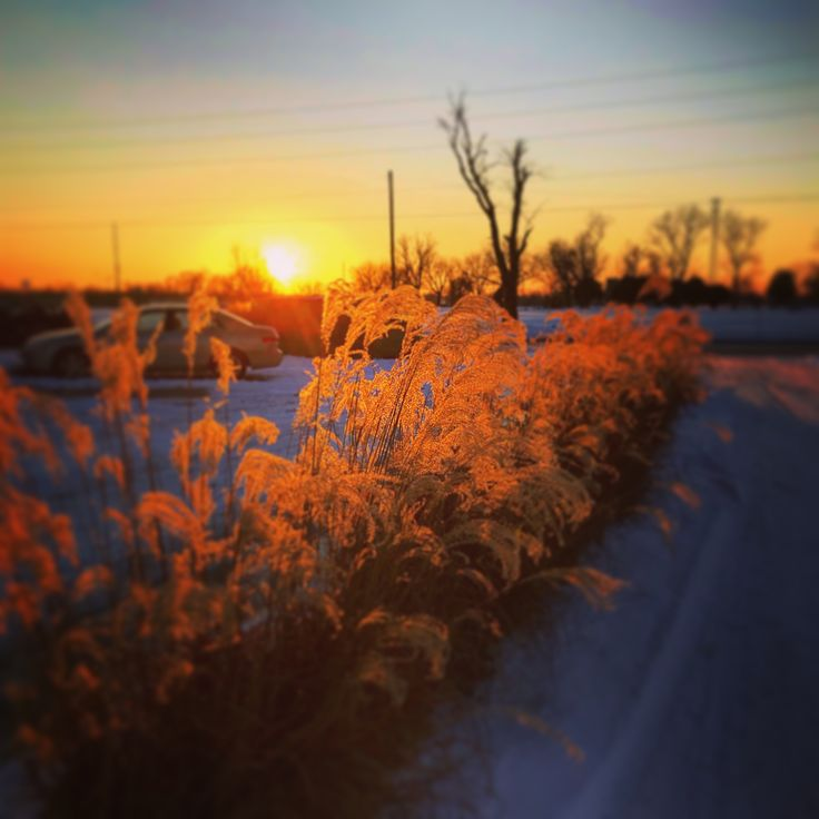 17/365 Sunset Wednesday 1/17/18 Pittsburg, Kansas  #Sunset #Pittsburg #Kansas #Wheat #BeautifulSky #Colorful #Gorgeous #January #Winter #ColdDay #Orange #Red #Fire #Wednesday #HumpDay #happiness #joy #hopeful #kindness #forgiveness #positivity #positivevibes #behappy #bekind #bepositive #newyearsresolution #photography #hobby