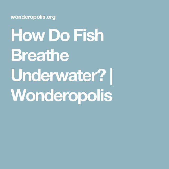 The 25 best breathing underwater ideas on pinterest for How do fish breathe underwater