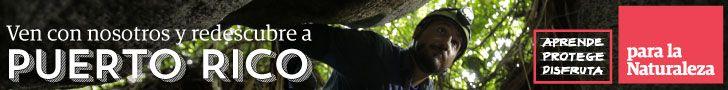 Conozca los beneficios del bórax y el ácido bórico para el control de insectos | Mi Puerto Rico Verde