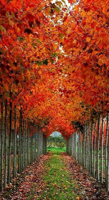 Tree Tunnel, Washington, U.S