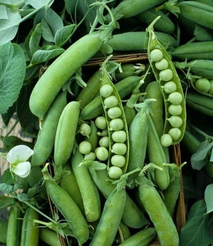 from the garden peas 30 bananas a day 30 best locavore s delight images on vegetable 902