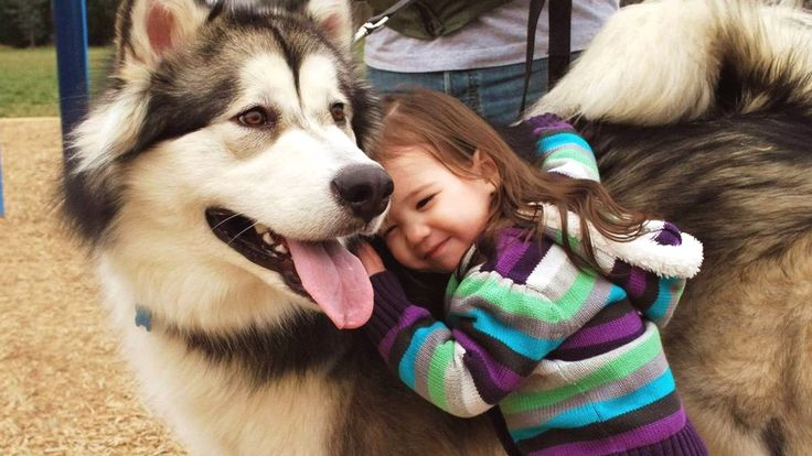 Desítka nejstarších psích plemen světa (III.): Aljašský malamut