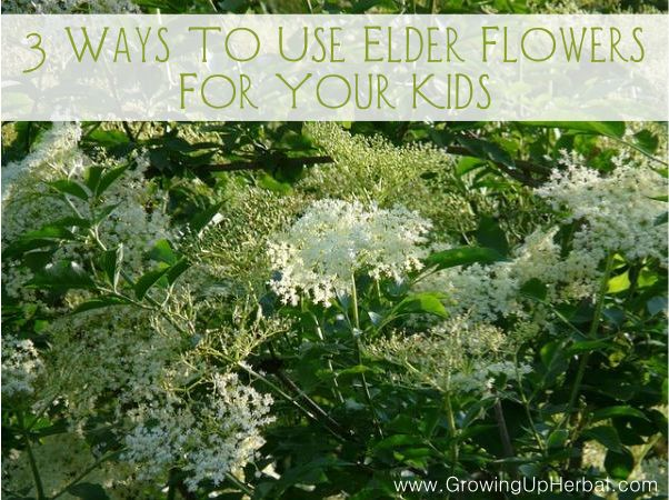 3 Ways To Use Elder Flower For Your Kids