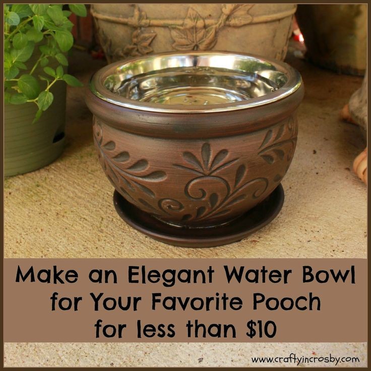 Best 25 Raised Dog Bowls Ideas On Pinterest Raised Dog