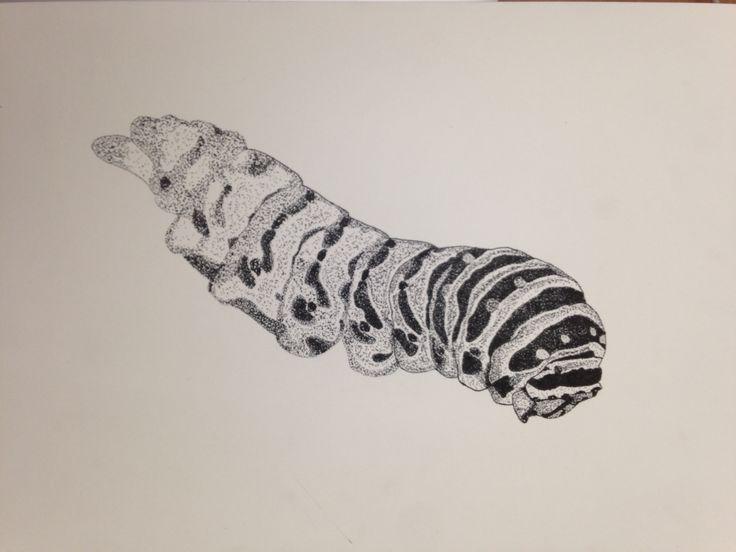 insecto, oruga, puntillismo, detalle, diseño, blanco y negro