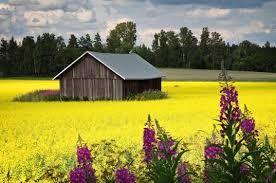 finland landscape summer