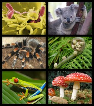 First picture is about worms. Second is a Koala. The third one is a Tarantula. The fourth is about many Snails. The fifth picture is a highly poisonous frog that lives in the Amazonas regions. And the sixth and last one also a highly poisonous    mushroom. It has that typical red with white points colors.