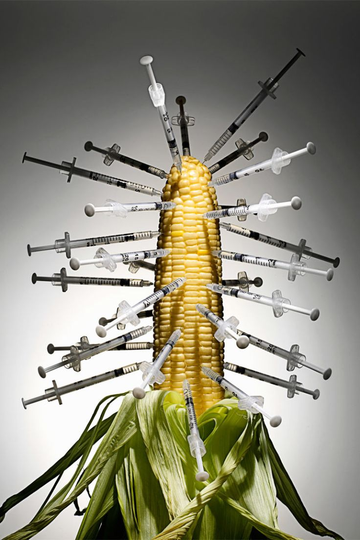 The Bad Seed: The Health Risks of Genetically Modified Corn  - ELLE.com