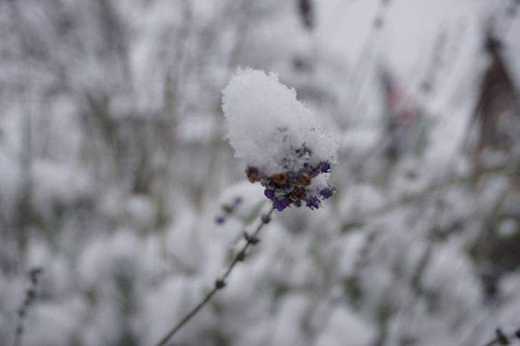 Winter #christmas #snow #Winterwonderland #beautiful #rom #newyork #seattle #paris #lissabon #berlin #hamburg #münchen #instalife #instagood #wocheaufinstagram #photographer #photographyoftheday #photography #instalove #picoftheday #pictureoftheday #losangeles #madrid #barcelona #bestphoto #frankreich #KunstderFotografie #entdeckerich