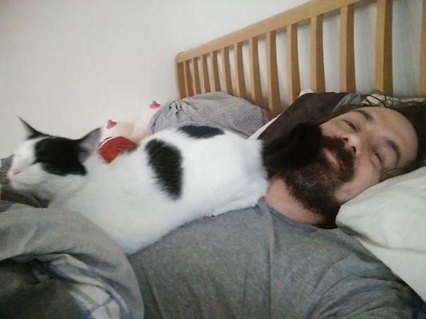 22 кота, которые плевать хотели на ваше личное пространство • Фактрум