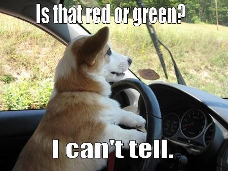 cd66847248433cb6830cd738d6e48395 funny dogs funny animals 19 best colorblind images on pinterest blinds, funny pics and blind