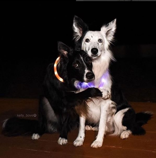 Halo Lights | Safety lights for dogs and campers