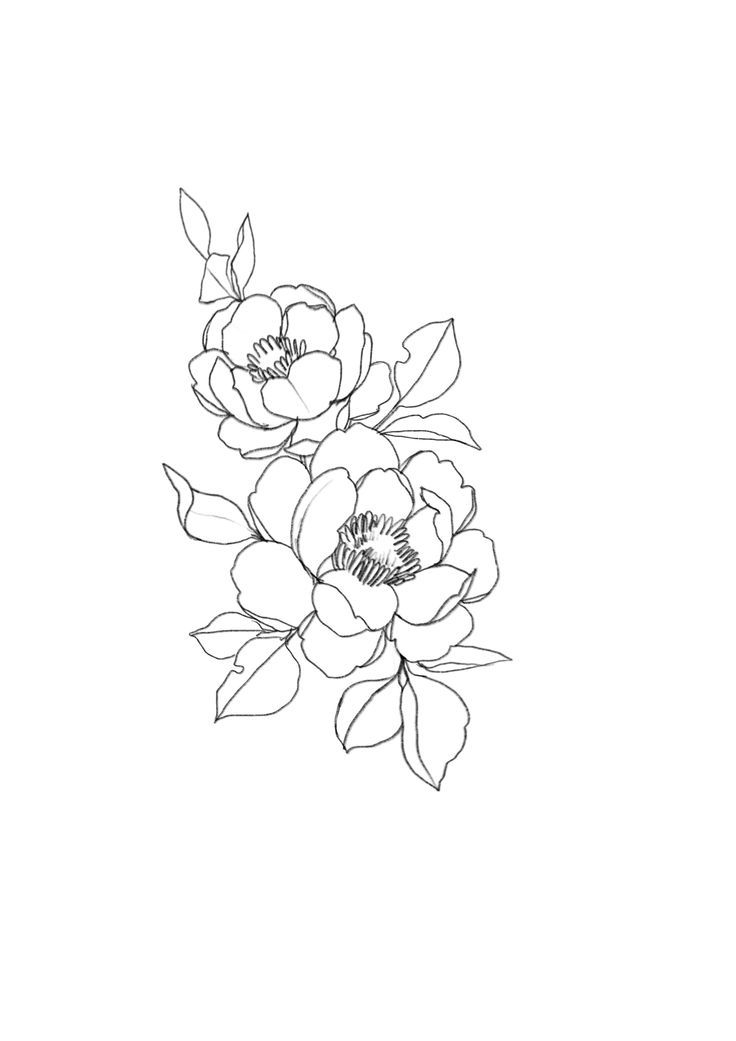 25 Beautiful Flower Drawing Ideas Inspiration With Images
