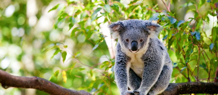 ACF | Australian Conservation Foundation