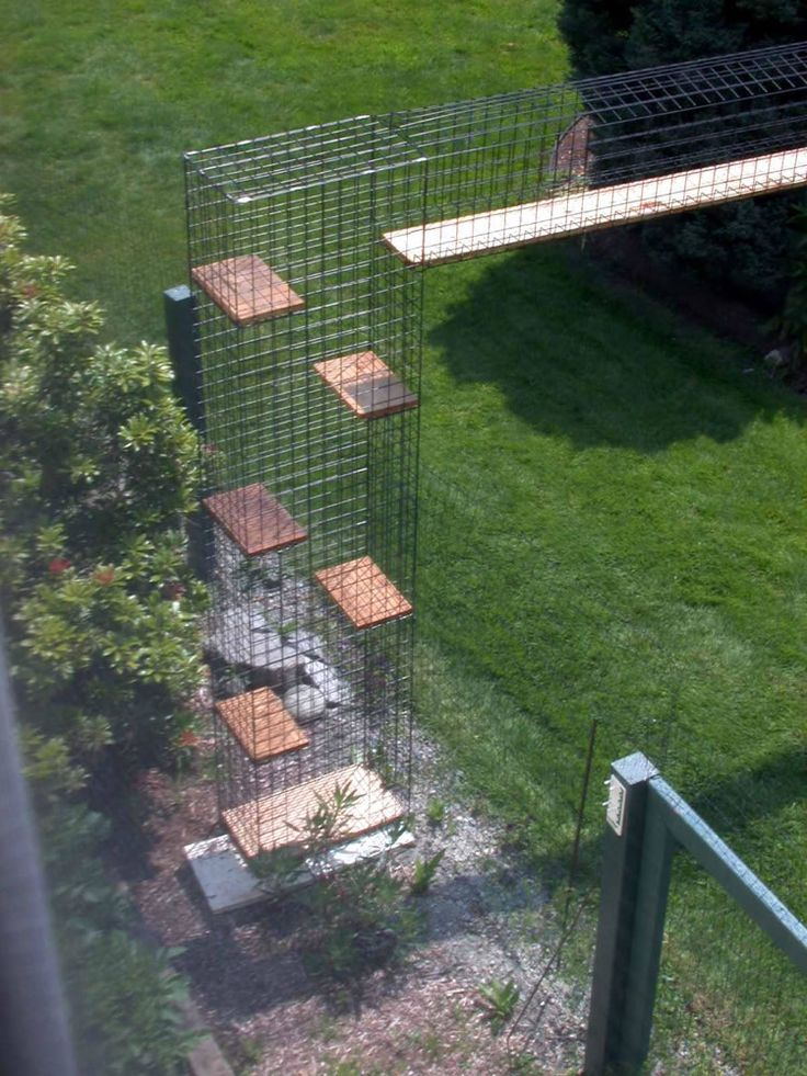 Cat Enclosure.. It would be great for ferrets too!