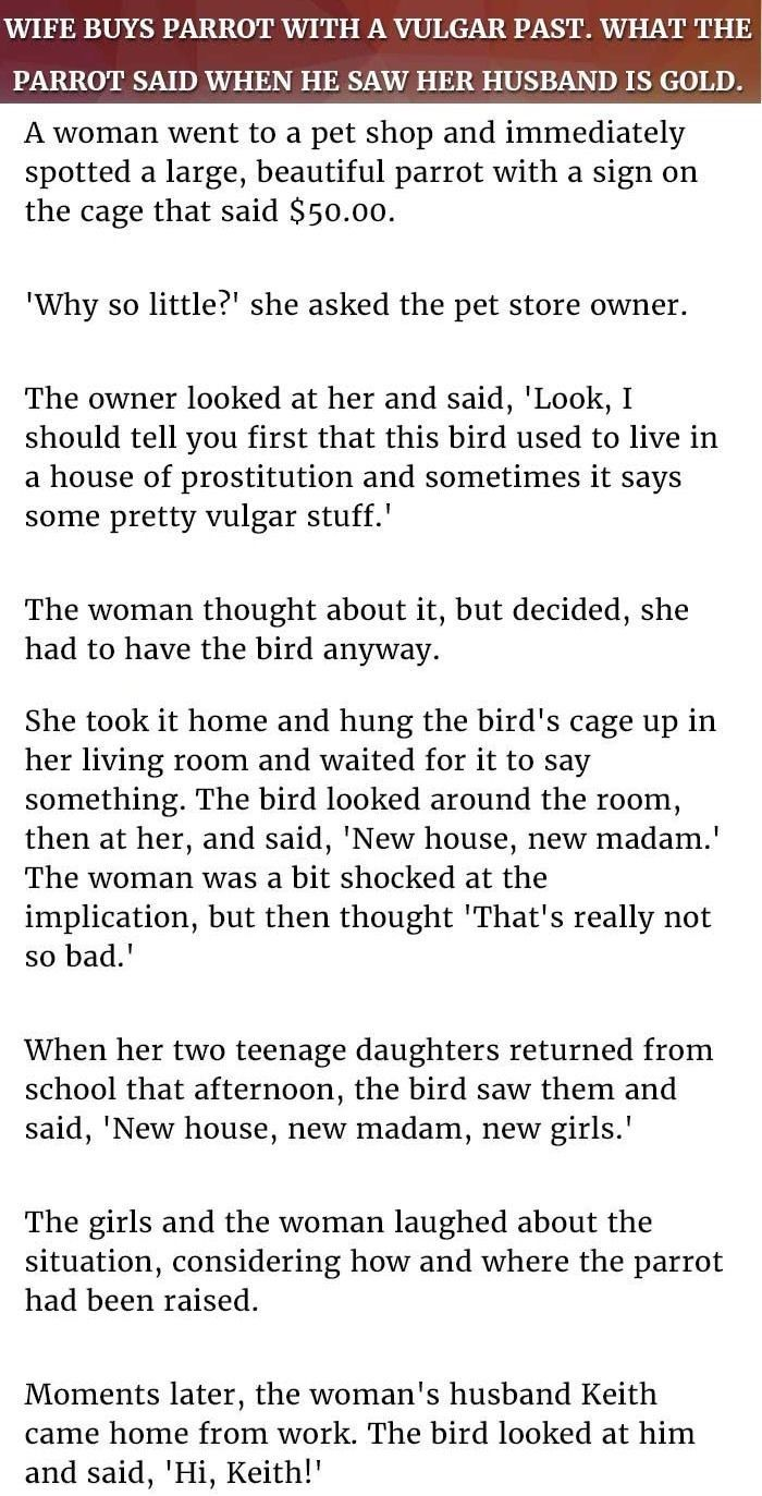 Wife Never Expected The Parrot To Say This To Her Husband. This Is Gold.  #LOL #Funny #AnimalJokes #CoupleJokes #Husbandwifejokes