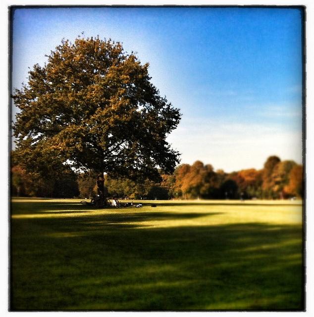 Stadtpark Grillwiese im Herbst, via Flickr.