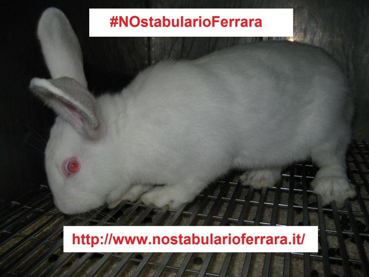 #NOstabularioFerrara Unisciti alla protesta! Firma la PETIZIONE: http://www.nostabularioferrara.it/