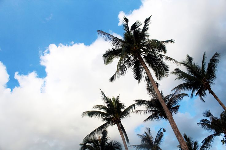coconut trees, palm trees, sky and exotic trees, thailand