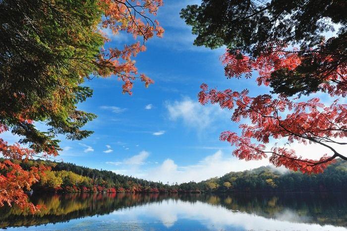 #中部 #長野 #山梨 #Nature 八ヶ岳の奥にある白駒の池は、日本で一番標高の高いところにある池として知られています。静かな湖面には周囲の木々や青空が映りこみ、紅葉時には特に神秘的な光景を見せてくれます。
