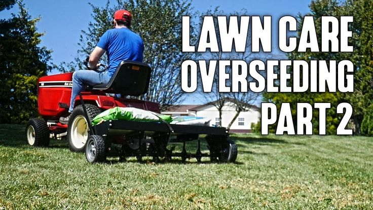 Lawn care overseeding dethatchcore aerategrass seed