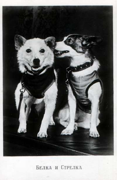 The dogs Belka and Strelka were sent into space and helped Russia to launch their manned missions. No means were available then to return these two little beauties to Earth, but they are proudly remembered.