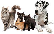 För dig som älskar djur :)