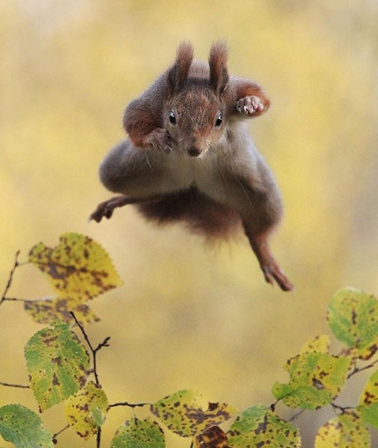 Best Caption This Images On Pinterest Captions Animal - Squirrel photographed in heroic pose becomes star of hilarious photoshop battle
