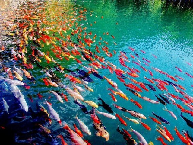 Colorful Family of Fish