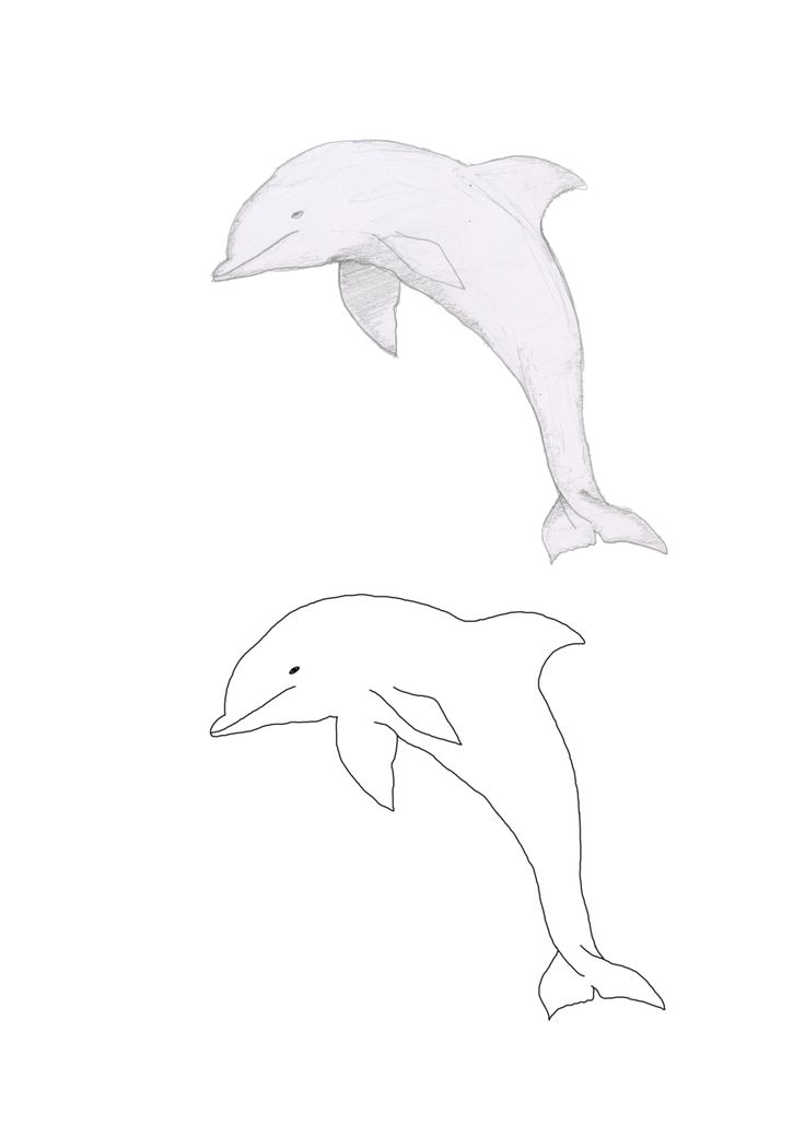 'The Hitchhiker's Guide To The Galaxy' dolphin Illustrations