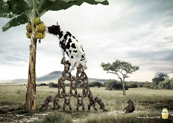 Banana flavored milk Print Advertisement by bbdo