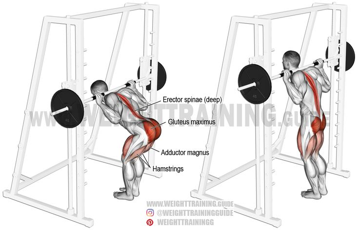Smith machine bent-knee good morning. An isolation exercise. Target muscle: Gluteus Maximus. Synergists: Hamstrings, Adductor Magnus, and Quadriceps. Important stabilizers: Erector Spinae.