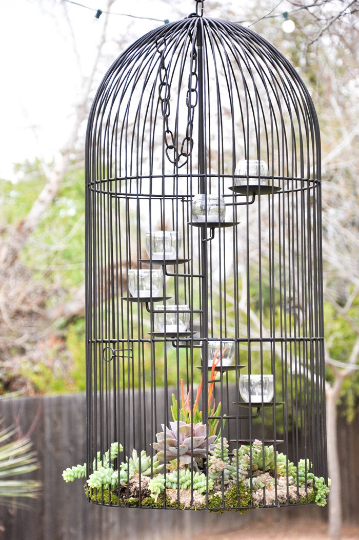 Make this succulent birdcage planter and hang in your yard. Lovely!