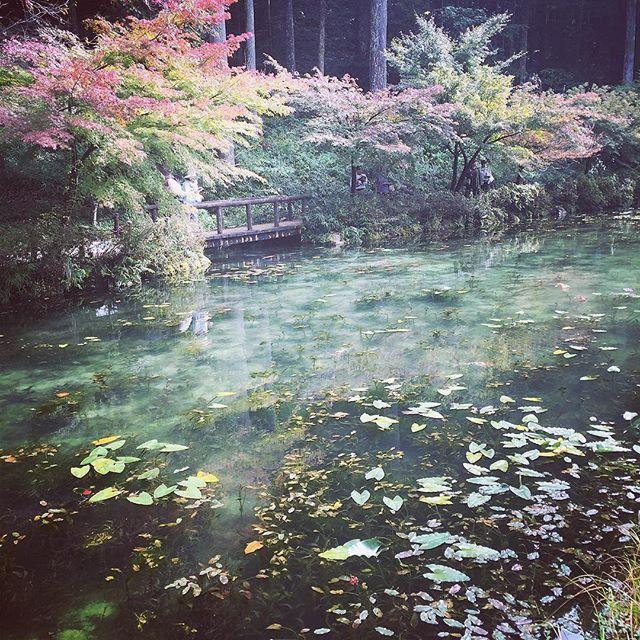 【cieca.yuri】さんのInstagramをピンしています。 《#モネ #鯉 #モネの池 #岐阜 #山 #紅葉 #岐阜県関市 #岐阜旅行 #織田信長像 #山奥 #自然 #森林 #森林浴 #森 #グリーン #緑 #木 #樹々 #ふとキュン #yurialbum🖼》