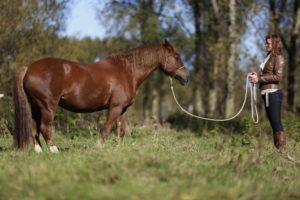 Licht, lichter, lichtst. Hoe je de samenwerking met je paard lichter kunt maken. – PonyTales