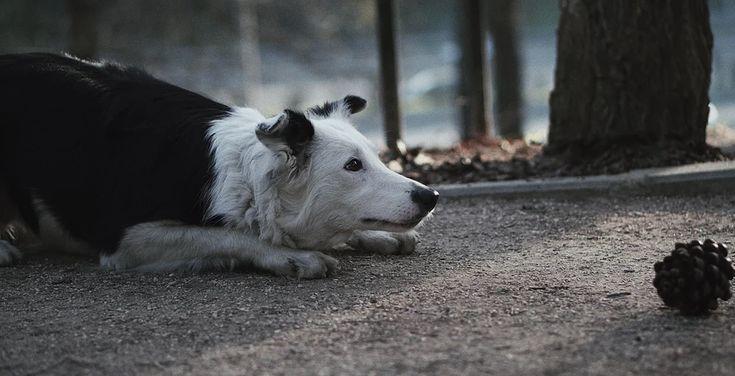 """""""Dogs"""", explica su director, es una pequeña película que trata sobre nuestros amigos caninos, y del amor gratuito e incondicional que nos entregan a diario. Es también la forma de Alex Diaz Films de mostrar la importancia y belleza de ese vínculo que puede establecerse entre un humano y un perro para, así, luchar contra el maltrato animal. A través de bellas imágenes y de los relatos de diversos humanos perrunos se compone un emotivo homenaje a una relación única, la que algunos tie..."""