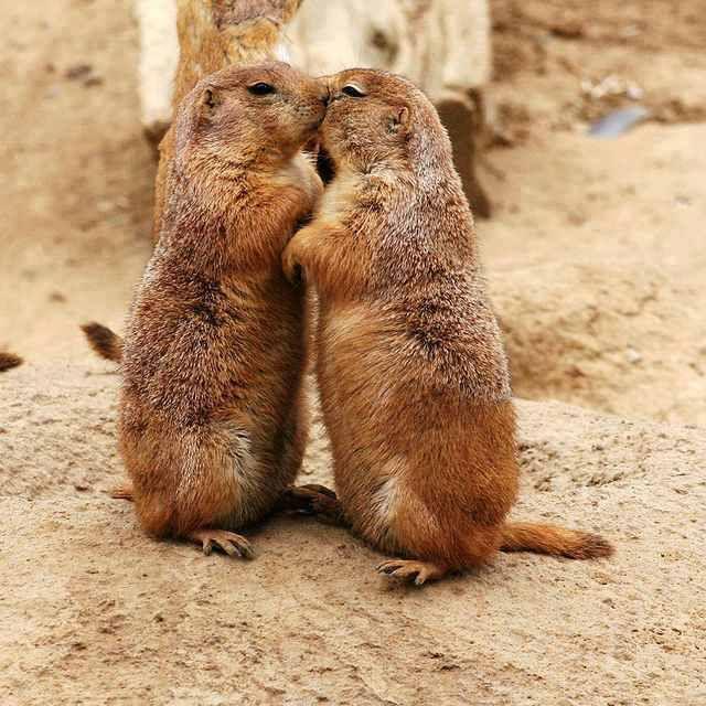 Lovely cuddling!