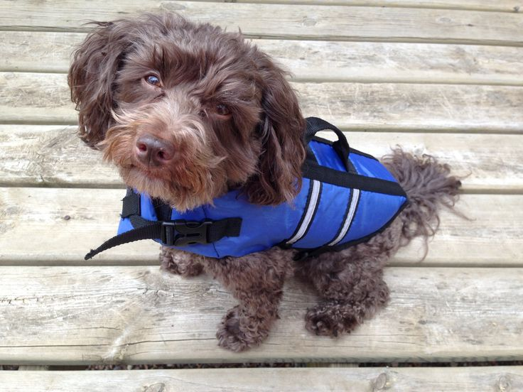 Water Safety for Dogs - The Need for Dog Life Vests // WhenPoochComesToShove.com #summersafety #doglifevests