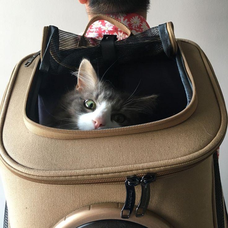 F Id Jikobukken 20180609173054j Plain キャリーバッグ リュック 大きい猫