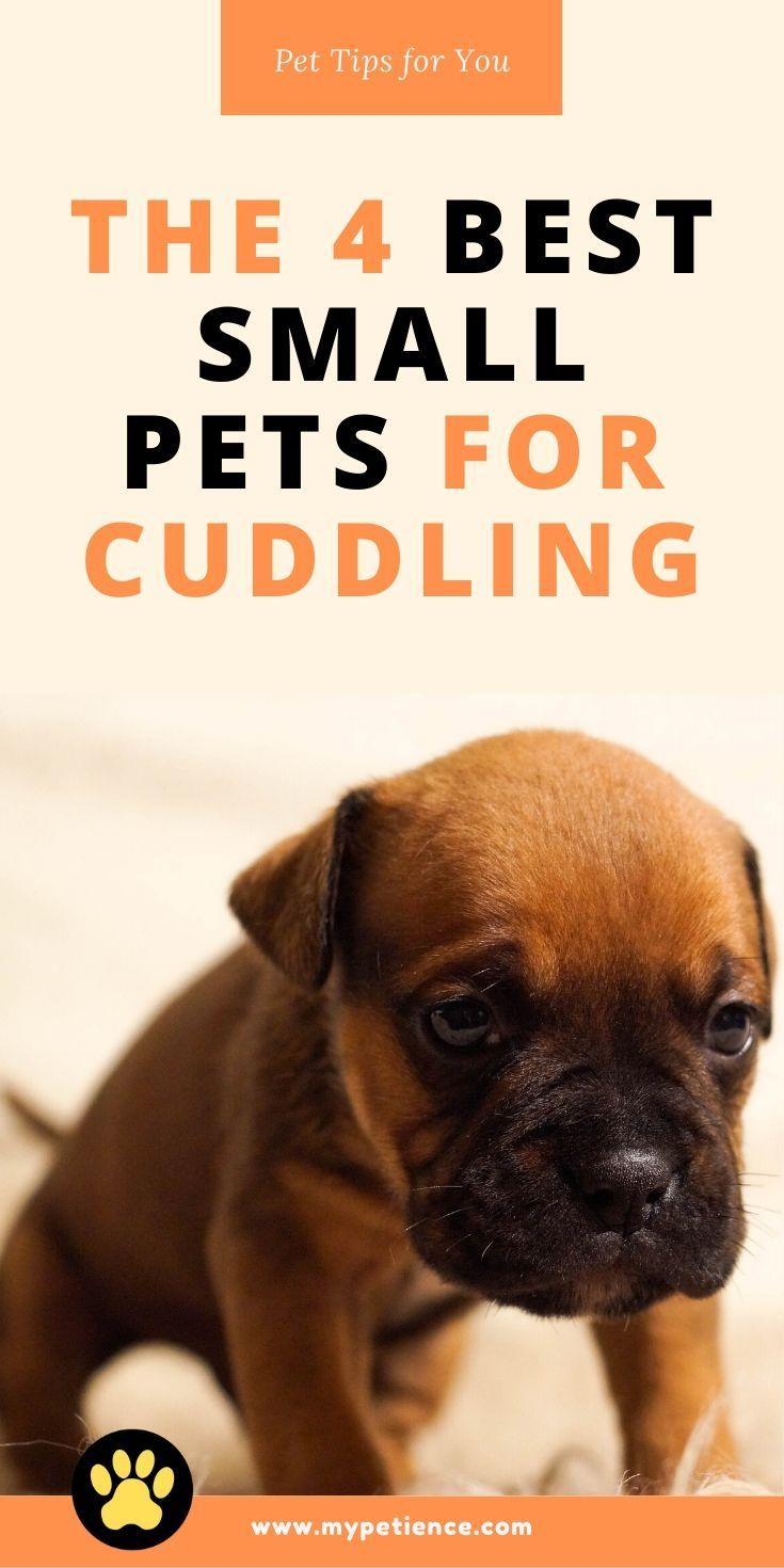 The Best Small Pets For Cuddling Teaching A Pet To Cuddle Best Small Pets Small Pets For Kids List Of Small Pets