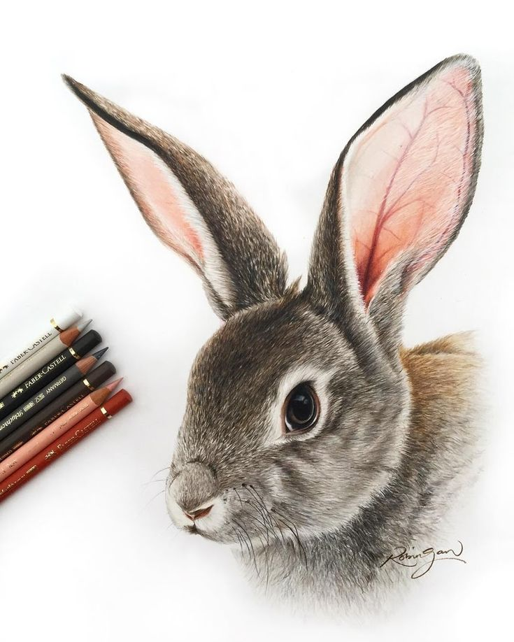 Realistic Color Pencil Animal Drawings – Zeichnen